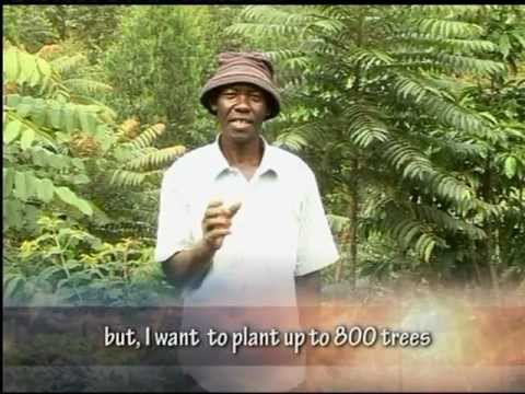 Trees for Global Benefits community carbon project in Uganda.