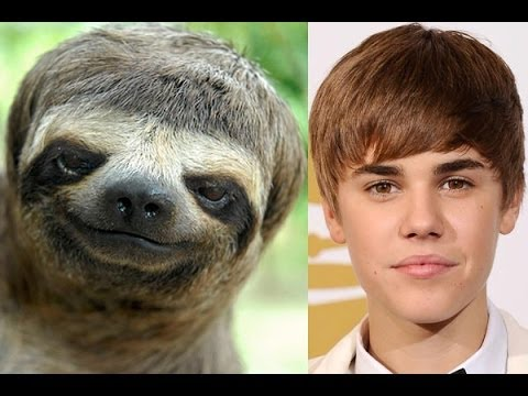 Celebrities look alike animals