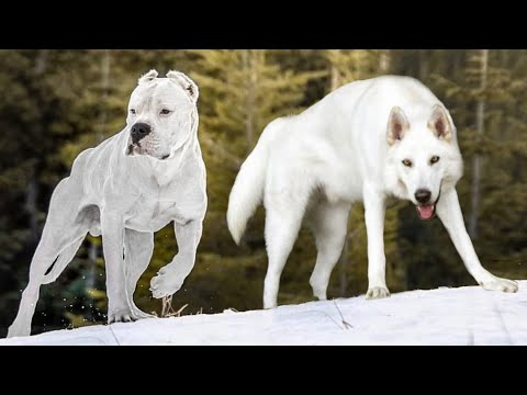 These Are 10 Whitest Dog Breeds Ever Youtube