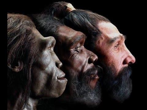 Evolution - Die Geschichte des Lebens Teil 1 Doku