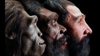 Evolution - Die Geschichte des Lebens Teil 1 (Doku)