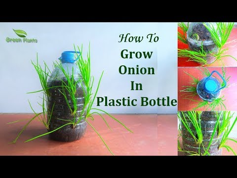 How to Grow Small Onion In Plastic Bottle | Garden Ideas // GREEN PLANTS