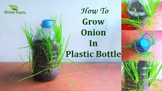 How to Grow Small Onion In Plastic Bottle | Garden Ideas // GREEN PLANTS