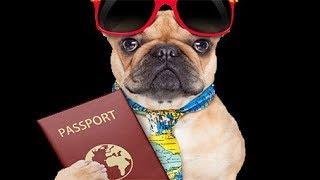 Мифы о ветеринарном паспорте — только полезная информация для людей, собирающихся купить щенка.