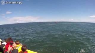 Огромный кит