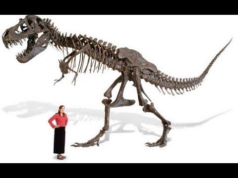 Как делают копии динозавров