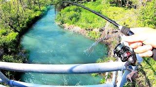INSANE Road-Side Bridge Fishing a TINY Creek!!