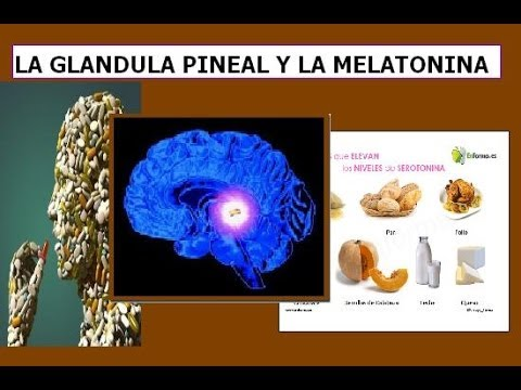 La glándula pineal y la melatonina - YouTube
