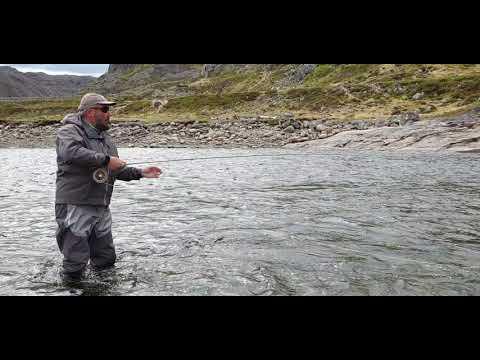 Вопрос: Какие рыбы не погибают без воды?