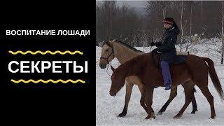 Секреты воспитания лошади