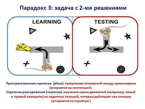 Парадоксы обучения.