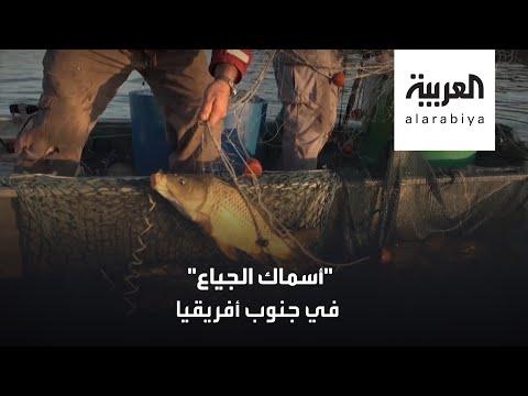 سمك -الكارب- قوت فقراء جنوب أفريقيا!  - 16:57-2020 / 7 / 31