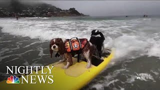 About 50 dogs recently competed in the world dog surfing championship california's linda mar beach. competition raises money for various dog-related c...