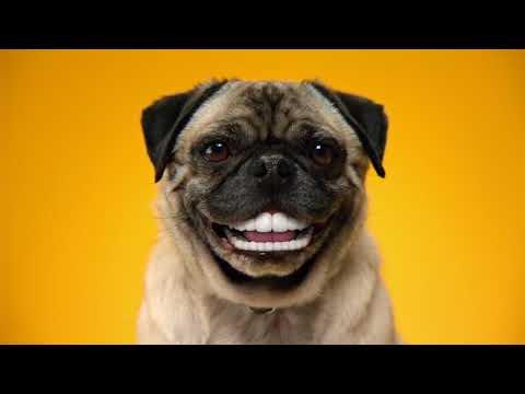 doggy dentures pedigree dentastix commercial youtube
