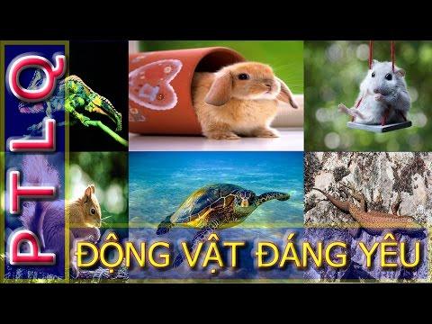 Hình ảnh động vật đẹp lung linh của loài chuột, rùa, sóc,  tắc kè hoa, thằn lằn và thỏ con