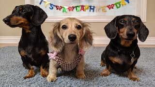 crusoe-s-new-sister-daphne-and-her-baby-shower