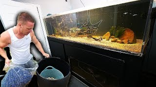 Large DIY aquarium filter for $50 | The King of DIY