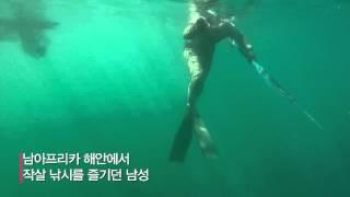 '아찔'  낚시 도중 만난 식인 백상아리! 마치 영화 '죠스'의 한 장면
