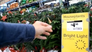 США. Все для САДА! Магазин Home Depot - Где и почем купить цветы, деревья и рассаду...(, 2014-02-05T01:48:39.000Z)