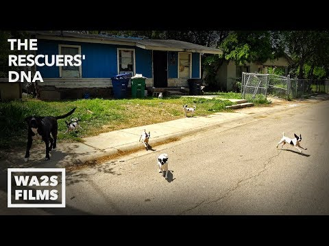20,000 Dogs Taken From Streets Of San Antonio Texas - This Is Why!