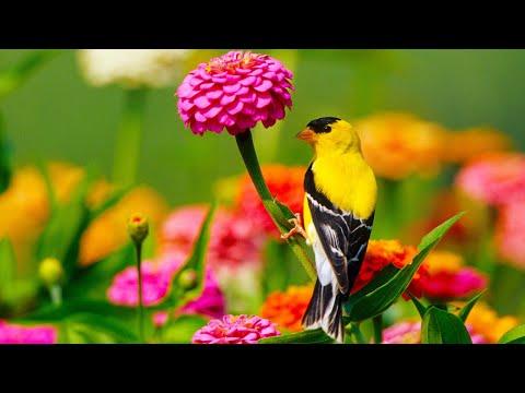 Beautiful Relaxing Hymns, Peaceful Instrumental Music,