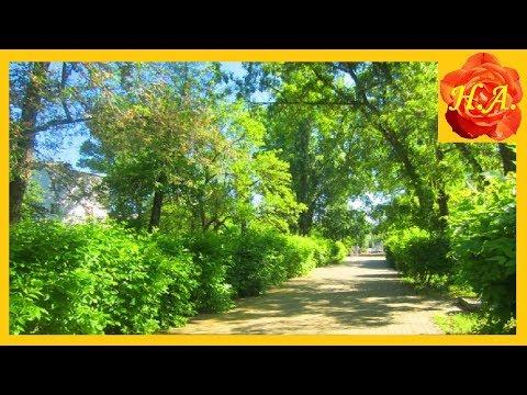 Прогулка в парке Котово Естественные звуки природы