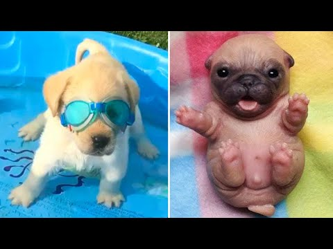 Baby Dogs ? Cute and Funny Dog Videos Compilation #4 | Funny Puppy Videos 2020