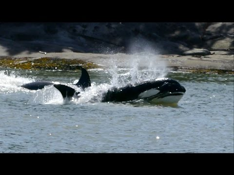 Thumbnail: Wild Whales 2014 Highlights