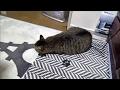 ぺったんこになる猫 Cat in front of stove