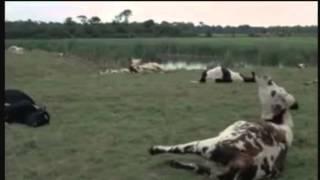 La Horse ( 1970 - bande annonce )