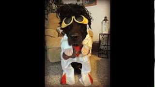 Happy Halloween!! Dog Costumes!! My Costume!! Thumbnail