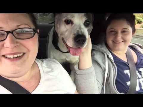 Dog Rescue!
