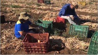 Lei inclui implantação de agroflorestas na Política de Desenvolvimento Rural