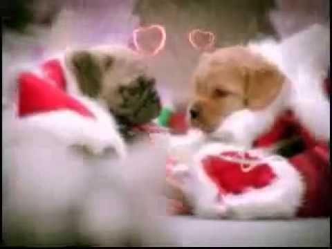 Dogs sing christmas song