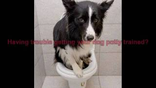 Potty Train Your Dog in 7 Days