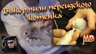 Выкормили котенка БЕЗ КОШКИ! ЧТО С НЕЙ СТАЛО? СМОТРИТЕ!