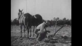 Vintage Farm Videos - Henry Browne, Farmer    1942