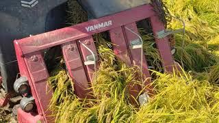 얀마콤바인 벼수확 쌀농사 추수 YANMAR Combine Harvester YH6115