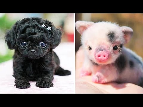 AWW Animals SOO Cute! Cute baby animals Videos Compilation Funniest and Cutest moment of animals #1
