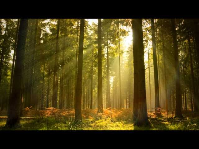 Instrumental Background Music - Piano & Nature - relaxdaily N°005 (not for video use ..for the mind)
