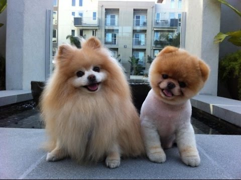 Dogs -Cute dogs -  Lovely dogs - A Funny Dog Videos 2016