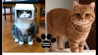 Original Animals #22. CUTE AND FUNNY ANIMALS VIDEO/ МИЛЫЕ И СМЕШНЫЕ ЖИВОТНЫЕ.