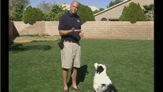 How To Train A Puppy : Giving Dogs Treats Flat-handed