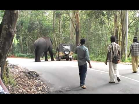 Kerala elephant attack youtube - photo#16