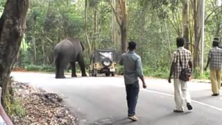 elephant attack in kerala 2015