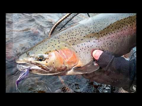 Salmon River - Swinging for Steelhead - 2016