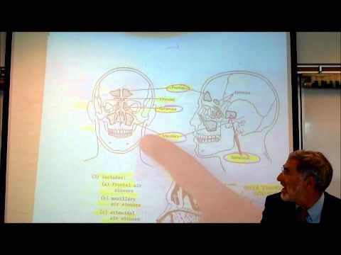 ANATOMY; RESPIRATORY SYSTEM by Professor Fink.wmv