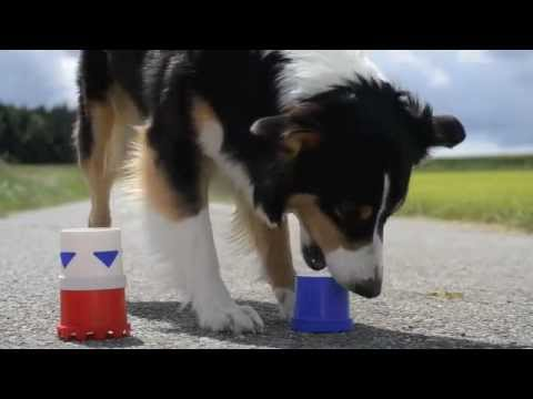 Amazing Dog Tricks 2 - AMY (Australian Shepherd)