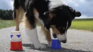 Amazing Dog Tricks 2 - Amy (australian Shepherd)