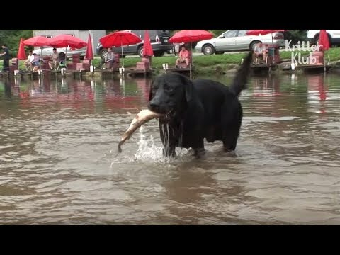 Dog Is Obsessed With Fishing | Kritter Klub